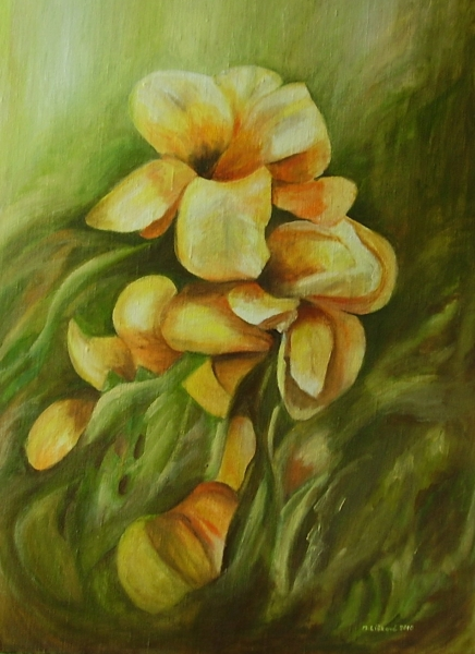 116 Žlté kvety