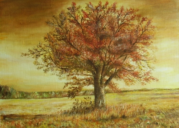 Osam. strom v Šalianskej rov.
