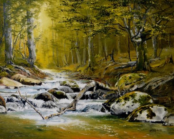 Zákutia lesného potoka
