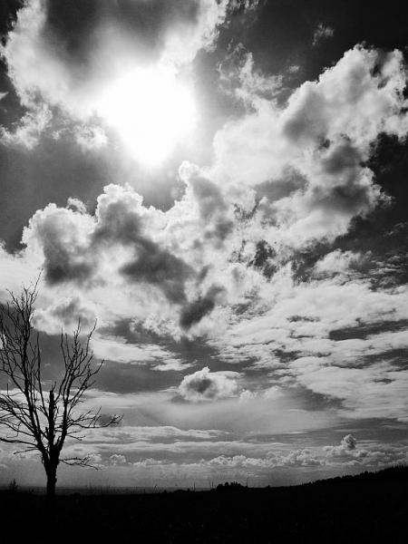 Osvícený stromoví!