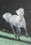 KONĚ 29. – Na stříbrné trávě