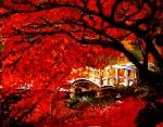 zářivé barvy podzimu