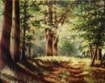 Sluneční les