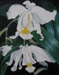 Orchidej bíla