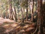 Les u Nového Boru