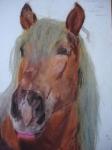 portrét koně