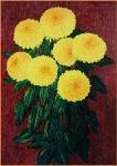 Žlté chryzamtémy
