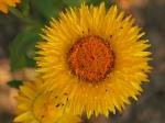 mušky na květu