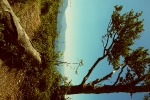 Strom na výhni