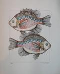 RYBY (Fish)